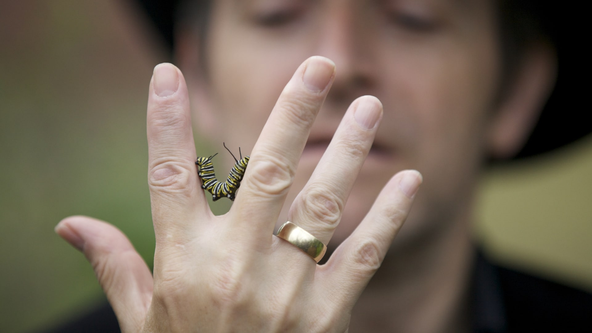 butterfly_cory_finger_